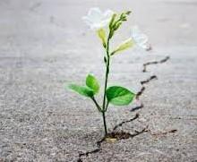FEBS y Resiliencia